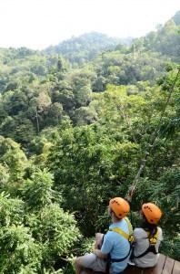 Hanumans Rainforest View