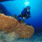Subacqueo e gorgonia - Immersioni a Phuket