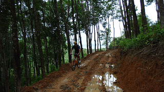Cycling through Rubber Plantiations in Koh Yao Yai Island