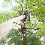 Phuket Ziplining & Flying Fox