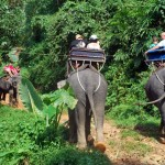 Elephant Trekking in Kapong Safari Ausflug, Thailand
