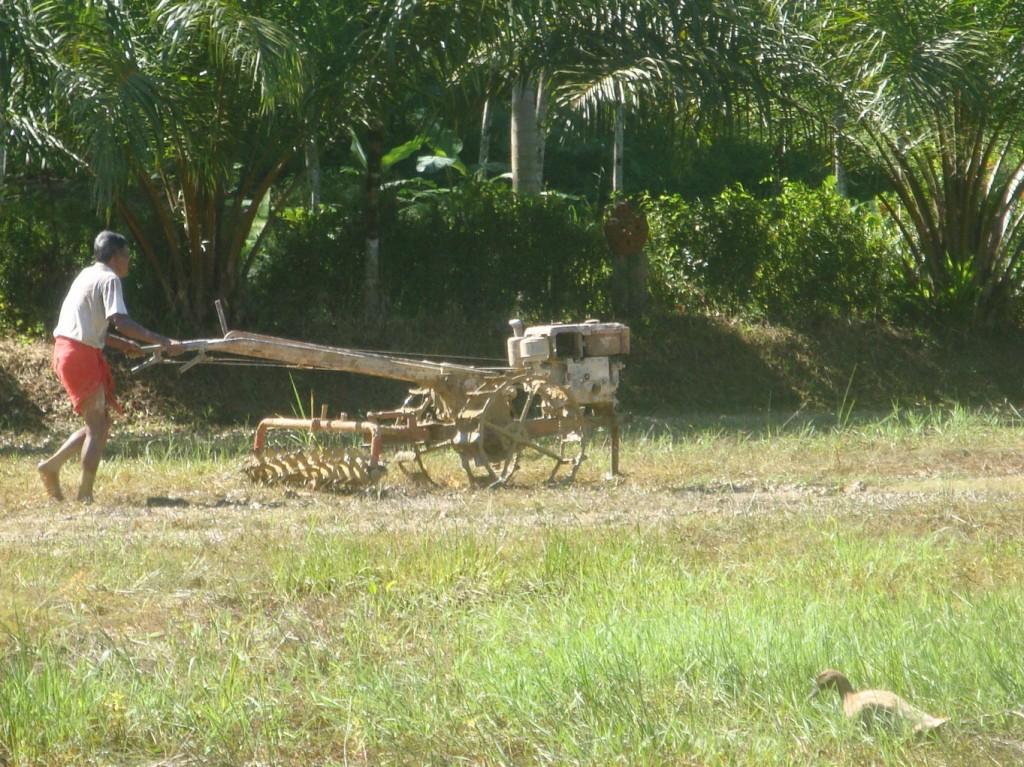 Kapong Tour farmer