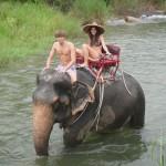 Trekking sugli elefanti in Phang Nga