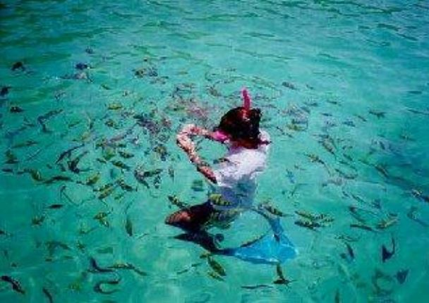 Snorkeling a Phi Phi Island - Easy Day Phuket Tours