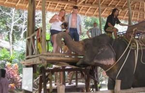Trekking sugli elefanti a Phuket - Salta su!