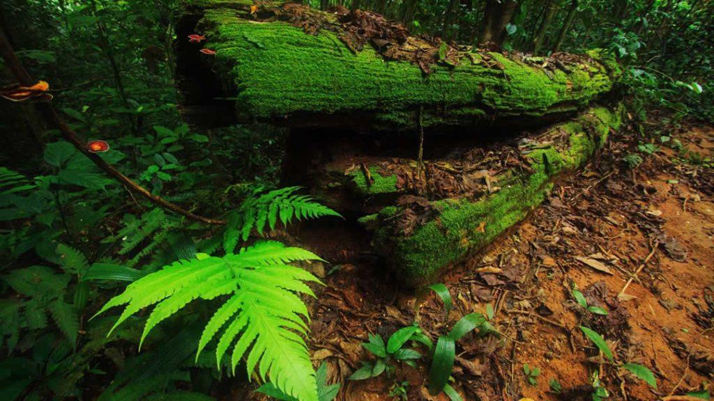 Khao Sok - Woodland