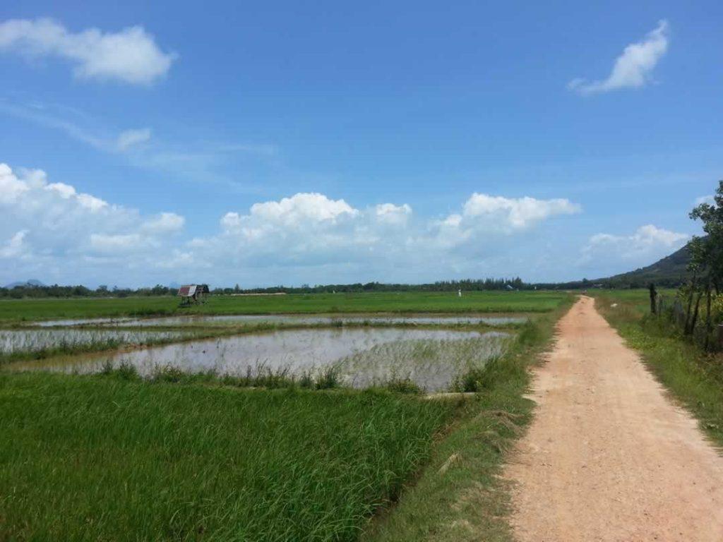 Koh Yao Noi Reisfelder