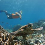 Phuket Island Hopping - Snorkeling with a Turtle in Phuket Island