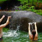 Elephant Bathing - Phuket Island