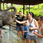 Elephants in Thailand - Phuket Elephant Camp