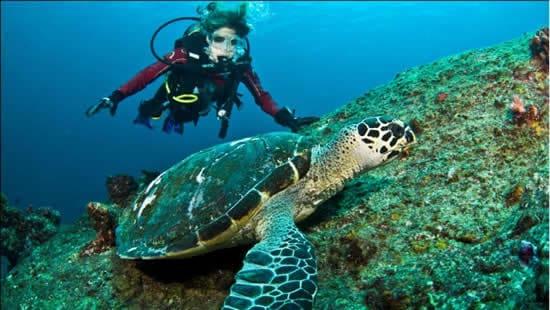 Scuba Diving from Phuket